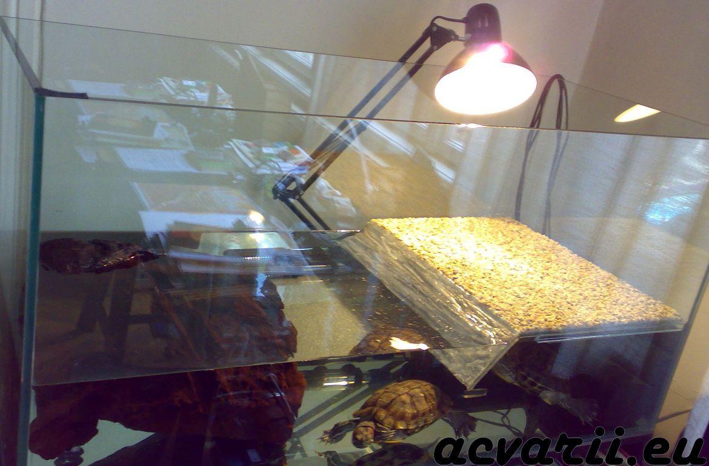 Acvarii cu broscute